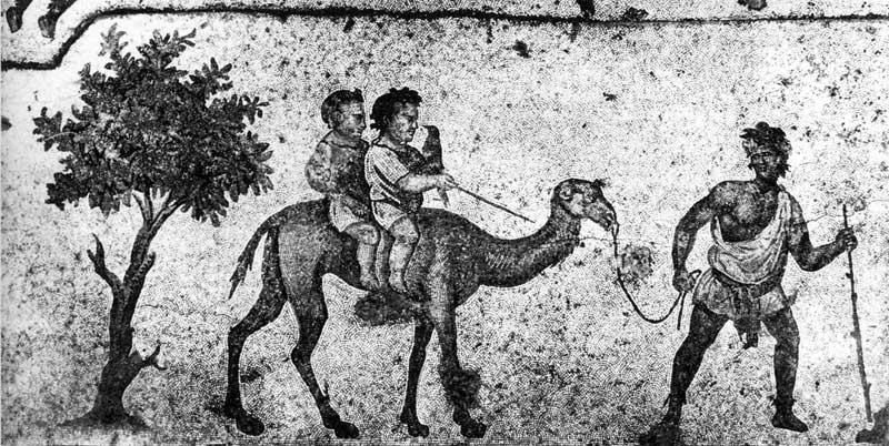 Мальчики на верблюде